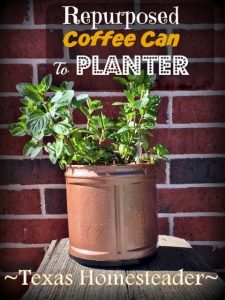 Easy ways to repurpose coffee cans - cute planter #TexasHomesteader