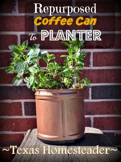 She pulls a plastic coffee can out of the recycling and when she's through? I LOVE this planter! Quick. Easy. CUTE! #TexasHomesteader