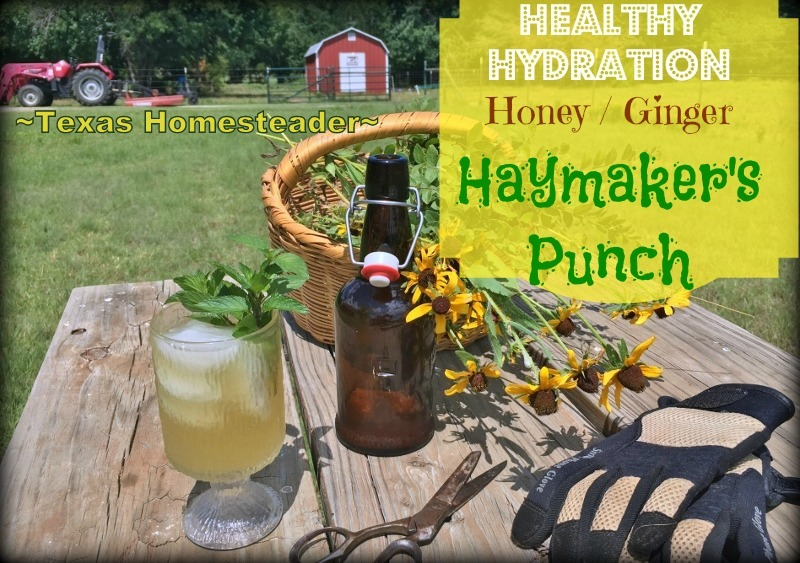 Homemade Haymaker's Punch - healthy hydration. Honey and ginger. #TexasHomesteader