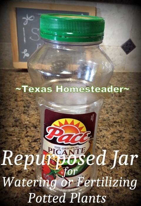 Keeping Potted Plants Watered In The Summer. I've repurposed a wide-mouth plastic jar into a way to easily deeply water my potted plants. Check out this homestead hack! #TexasHomesteader