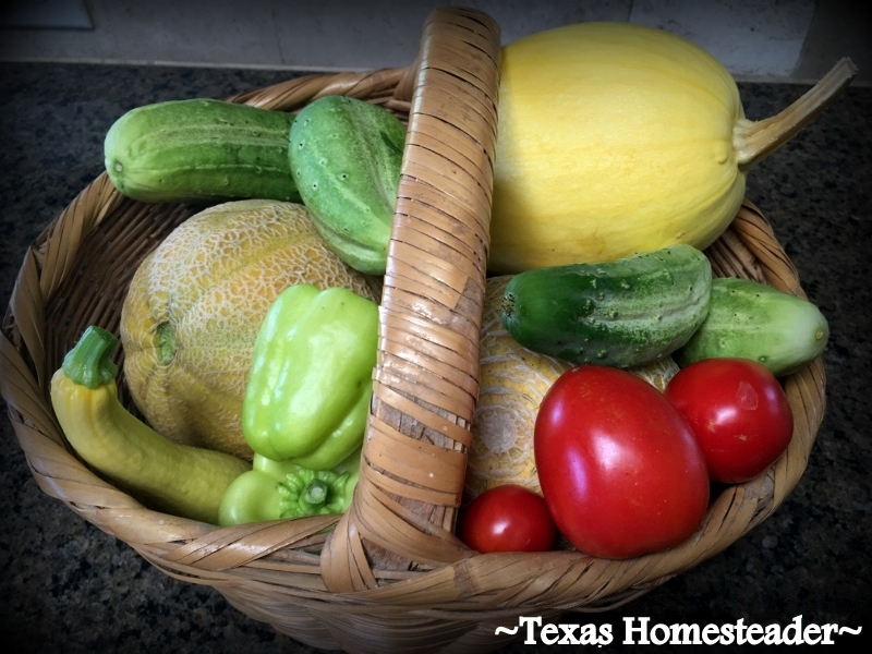 Blessing BasketL One day each week, harvest everything ripe in the garden and put it in a basket. Then share that bounty with a friend or neighbor. #TexasHomesteader