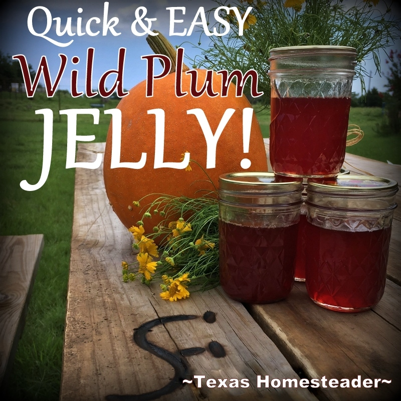 Wild Plum Jelly recipe - No peeling, no pitting, no PECTIN Check out this Lazy-Girl's wild plum jelly recipe. #TexasHomesteader
