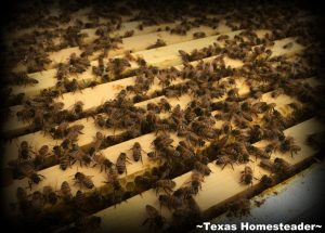 You feed your beehives differently in the winter than you did in the warmer months. Come see how we feed our bees during winter months. #TexasHomesteader