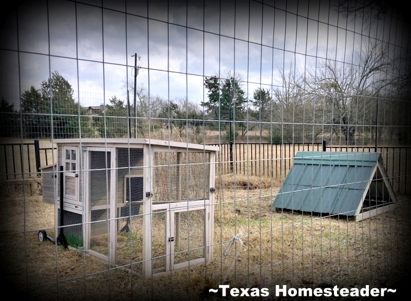 When our cistern enclosure deteriorated we tore it down but we needed a way to keep our mini Schnauzer safe around it. Use Whatcha Got! #TexasHomesteader