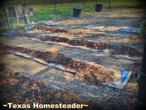 I'm trying some new things in our vegetable garden this year. It promises to save me lots of back-breaking work in the garden. SCORE! #TexasHomesteader