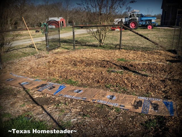 Preparing the garden for winter: spread crimson clover in the bare rows to provide a living mulch & nitrogen for next spring's planting #TexasHomesteader