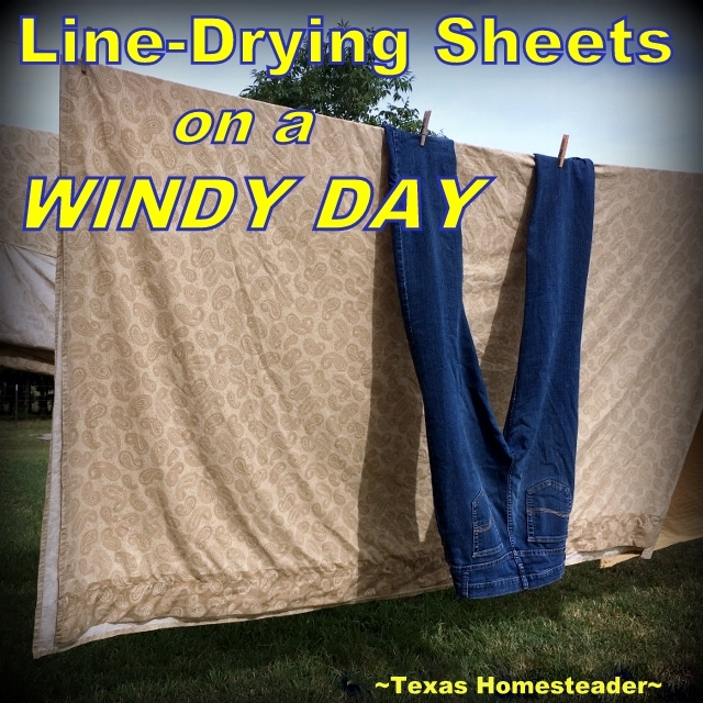Using heavy denim to keep sheets from blowing on the clothesline. Come with me for a day on the Homestead. The changing seasons are welcome, but not without their trials. #TexasHomesteader