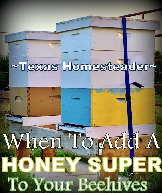 It's time to add a honey super box to our beehives. The bees will fill it with the sweet honey we crave! #TexasHomesteader