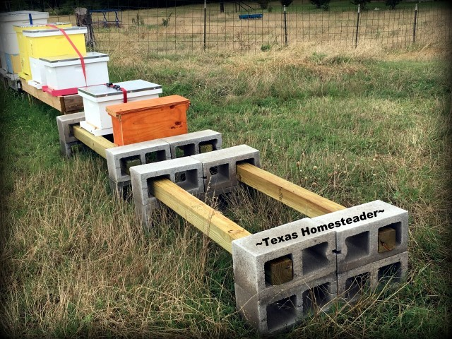 Beehive Stands Put Together In 5 Minutes? YES! We're Using Concrete Cinder Blocks & 4x4 Posts. Come See How Easy It Is! #TexasHomesteader