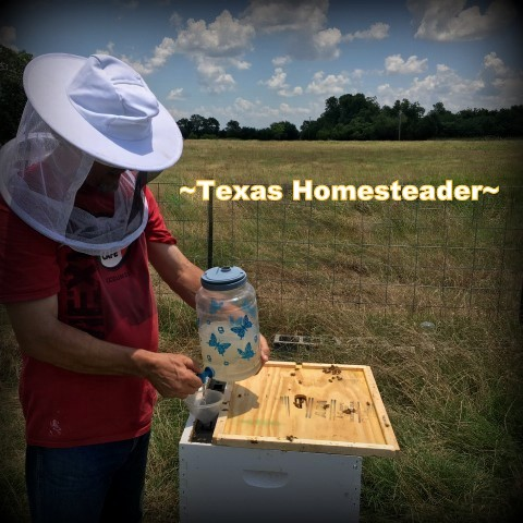 Feeding the honeybees sugar water. There are different ways to feed your bees sugar water when they need a little help. We like using a frame feeder best. #TexasHomesteader