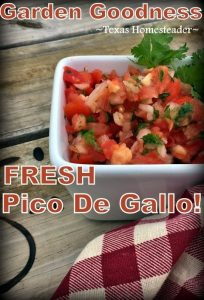 Fresh pico de gallo in minutes using fresh garden vegetables. Ripe tomatoes, onion, garlic, jalapenos and cilantro. ENJOY your veggies! #TexasHomesteader