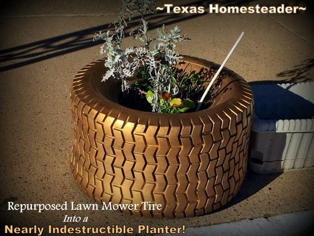 A cute nearly indestructible planter that can endure year after year in challenging Texas weather. A small, repurposed tire to the rescue! #TexasHomesteader