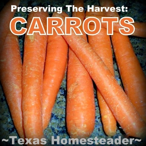 I was recently given way too many carrots to eat before they went bad. So I dehydrated them, now I have lots for winter enjoyment. #TexasHomesteader