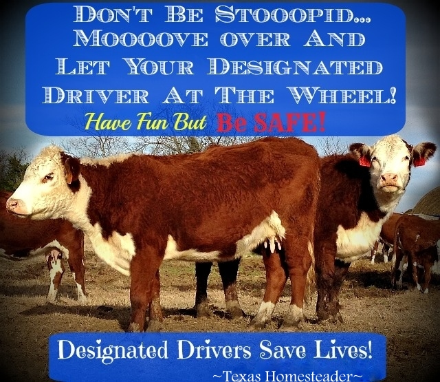 Don't Be Stoooopid! Moooove over & let your designated driver take the wheel. Designated Drivers Save Lives! #TexasHomesteader
