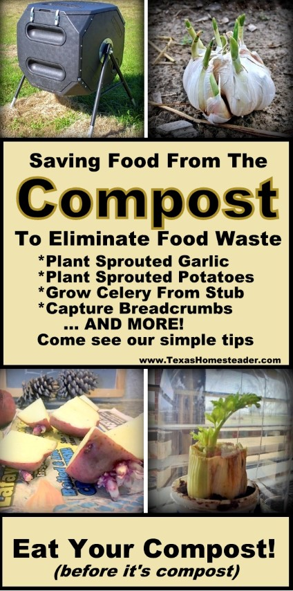 Can you actually EAT your compost? Stay with me now, I'm not saying you should eat the contents of your compost bucket. But there's LOTS of food you can make with scraps you'd previously just toss in the composter. Come see my favorite tips. #TexasHomesteader