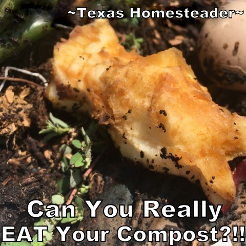 Can you eat your compost? Come see ways I've saved food previously destined for the compost pile for delicious use in my kitchen. #TexasHomesteader