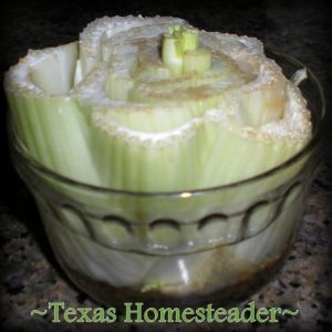 Regrow celery to to eliminate food waste. Can you eat your compost? Come see ways I've saved food previously destined for the compost pile for delicious use in my kitchen. #TexasHomesteader