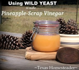 Apple or pineapple scraps to make vinegar. Can you eat your compost? Come see ways I've saved food previously destined for the compost pile for delicious use in my kitchen. #TexasHomesteader