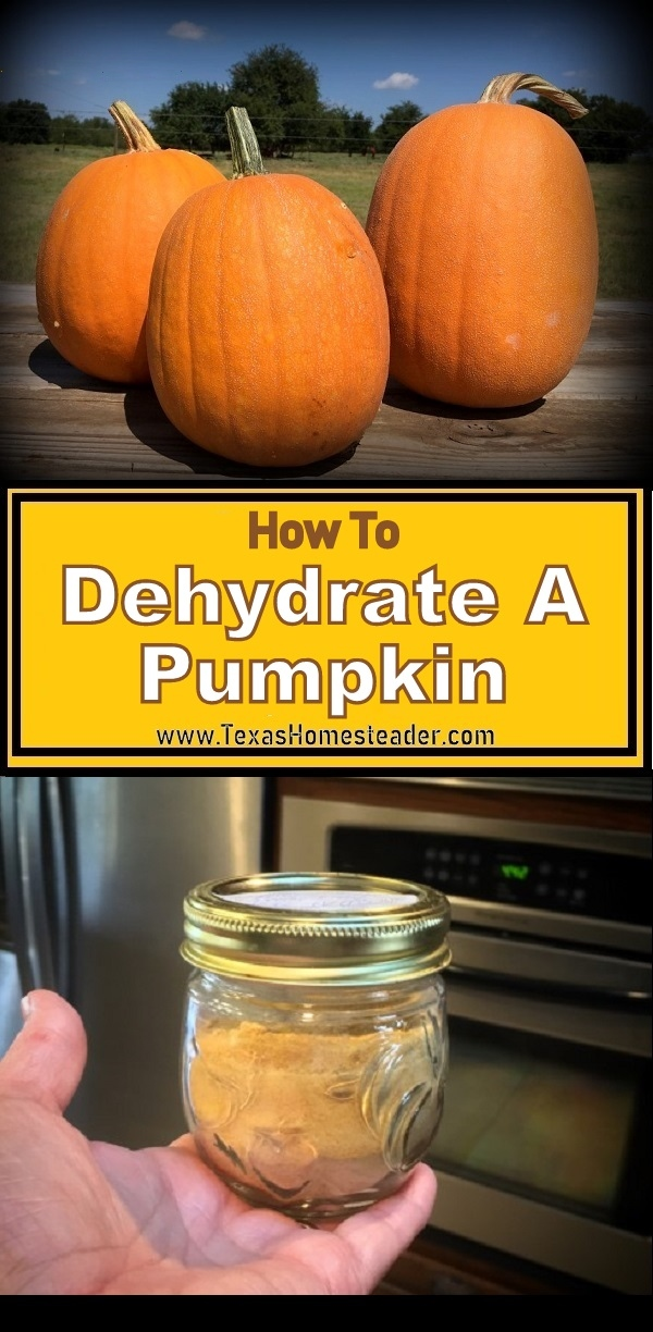 Dehydrate fresh garden pumpkin and store in the pantry all year long #TexasHomesteader