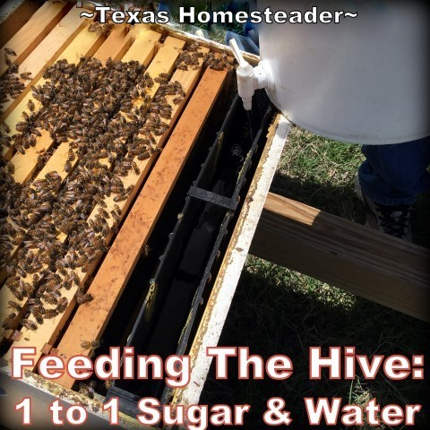 There are different ways to feed your bees sugar water when they need a little help. We like using a frame feeder best. #TexasHomesteader