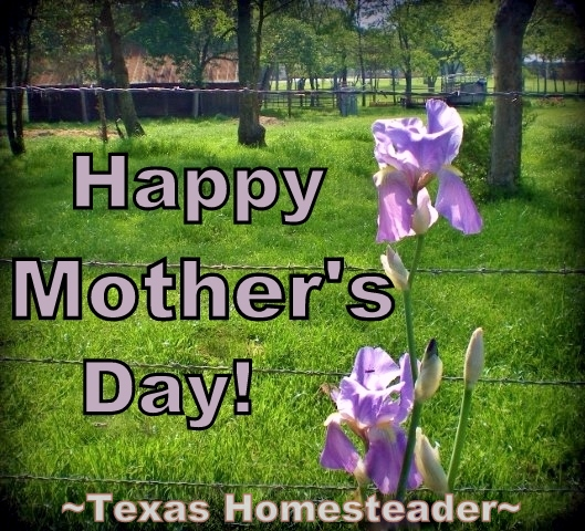 Happy Mother's Day out there to all those moms workin' hard and lovin' their babies, no matter what their baby's age! #TexasHomesteader