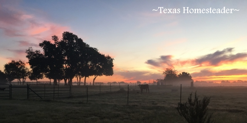 Pretty In PINK! What a fitting sunrise to celebrate Breast Cancer Awareness Month! #TexasHomesteader