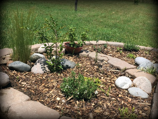 We needed to landscape our porch area. But soil and plants are expensive! Come see how I landscaped it beautifully on the cheap. #TexasHomesteader