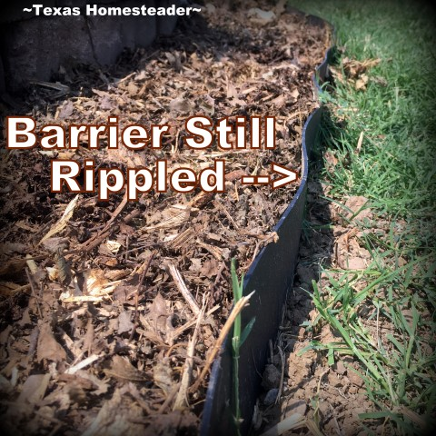 Bermuda Grass barrier rippled after adding bark mulch. When it creeps into your raised beds, heck you've lost the war! Come see how we're protecting our raised beds with grass barrier. #TexasHomesteader