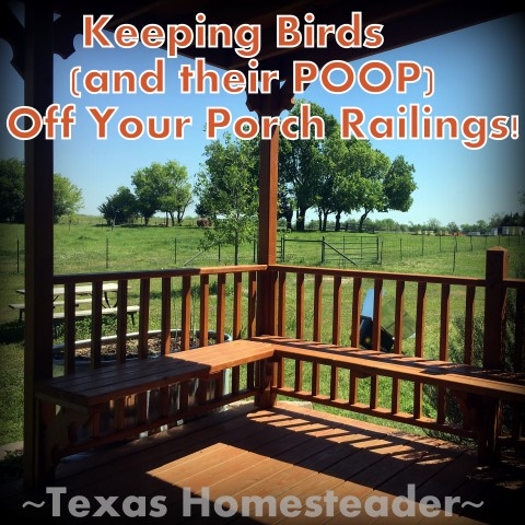How do you keep birds (and their POOP) off your porch or deck railings? We came up with a simple, CHEAP solution that works like a charm! #TexasHomesteader