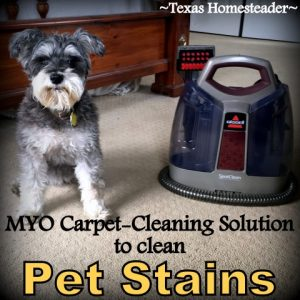 MYO carpet cleaning solution for pet stains. Texas Homesteader's Top 10 posts of 2019 #TexasHomesteader