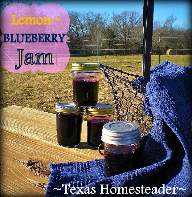 My blueberry jam is delicious and inexpensive. Both my jars & my Tattler lids are reusable - good for me & good for the environment! #TexasHomesteader