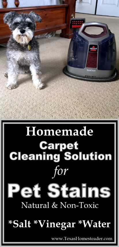 My homemade carpet-cleaning solution for pet stains contains only vinegar, salt & water. Non-toxic and effective. #TexasHomesteader