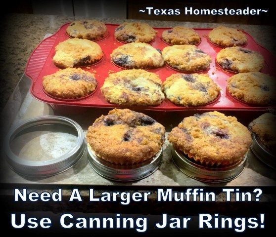 Need more muffin cup spaces? No worries! I used wide-mouth canning rings for those last 4 muffins. Everything baked up at the same time. #TexasHomesteader