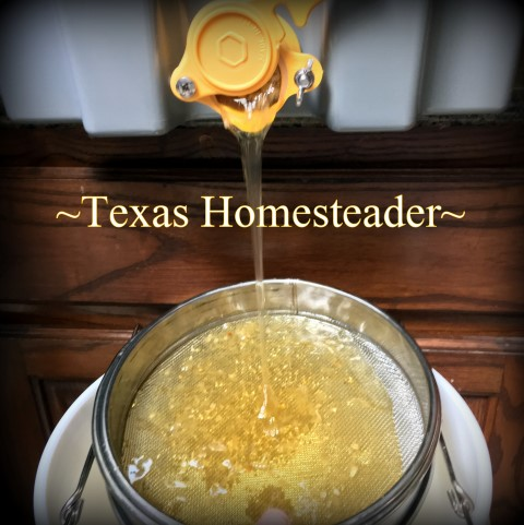 Filtering honey through sieve. See how we took our honeybee's honey from hive to glass jars. I share tips about honey moisture monitoring and more. #TexasHomesteader