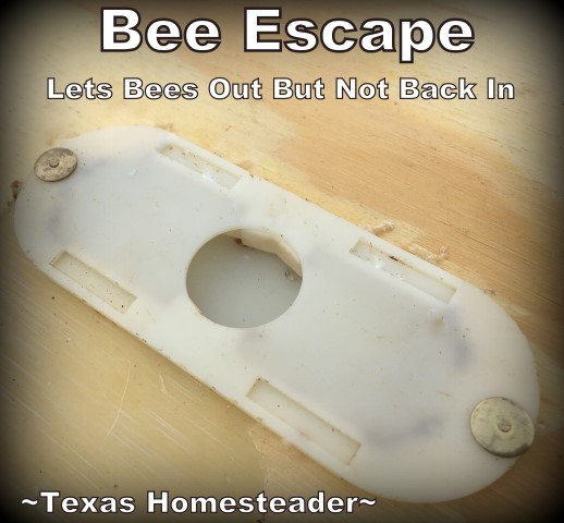 Using a bee escape before honey harvest. There's more to harvesting honey than just walking to the hives. Come see the steps we take before harvesting that sweet honey we crave. #TexasHomesteader