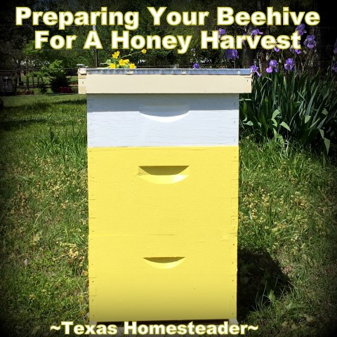 Beehive - two deeps, one honey super, telescoping cover. There's more to harvesting honey than just walking to the hives. Come see the steps we take before harvesting that sweet honey we crave. #TexasHomesteader