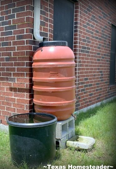 Rainwater catchment system. A repurposed coffee can can be used for deep soak watering in the garden. It conserves water while allowing water to slowly drip. #TexasHomesteader