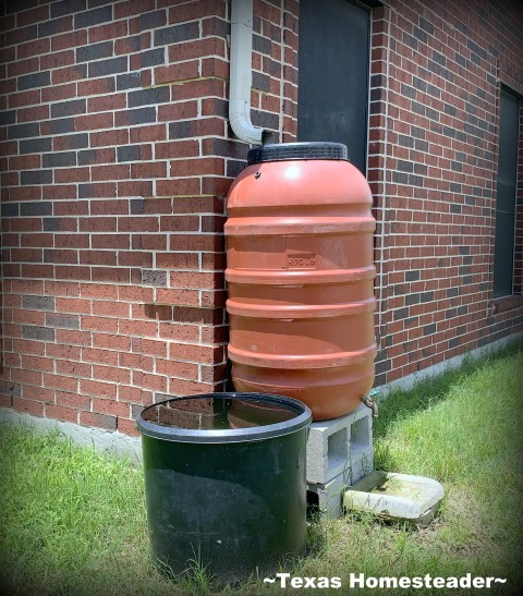 55-gallon food-safe barrel with spigot. See the three different rainwater catchment systems that work best for our homestead. We irrigate our gardens 100% with captured rainwater #TexasHomesteader