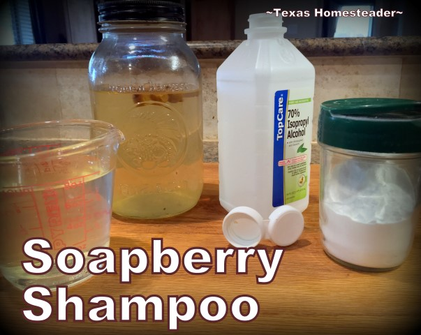 Using Soapberries for a natural shampoo is easy on your hair and easy on your budget. It's true - soap really DOES grow on trees! #TexasHomesteader