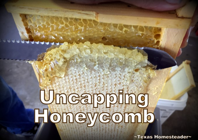 Uncapping honeycomb. See how we took our honeybee's honey from hive to glass jars. I share tips about honey moisture monitoring and more. #TexasHomesteader
