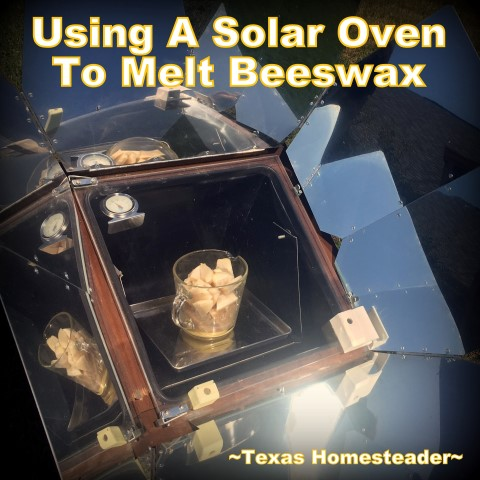 Using a solar oven to melt beeswax. It's easy to make your own natural beeswax candle. It's fun, it's easy, and it's natural. And who doesn't love a beeswax jar candle?? #TexasHomesteader