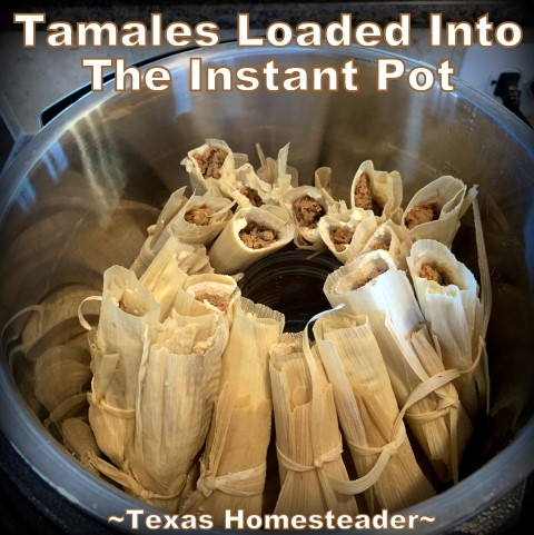 Loading assembled tamales in Instant Pot pressure cooker. It's time consuming to make homemade tamales. But it's very easy. Come see my step-by-step directions complete with photos and recipe. #TexasHomesteader
