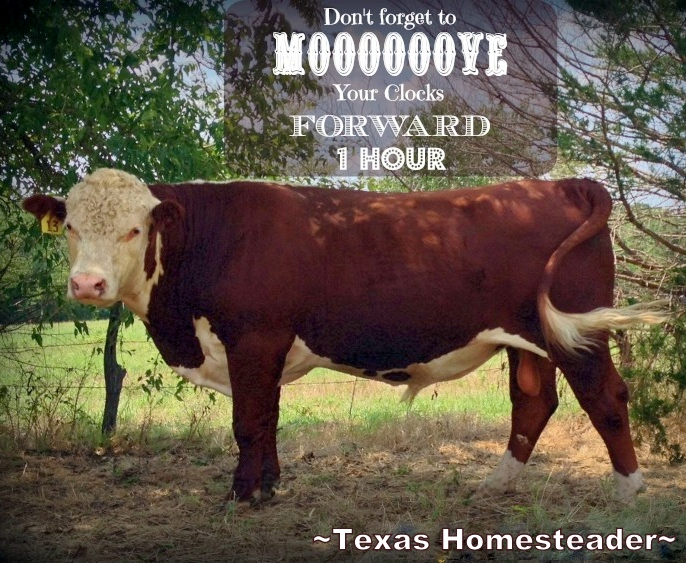 Daylight Savings Time - Spring forward - Move clocks up 1 hour #TexasHomesteader