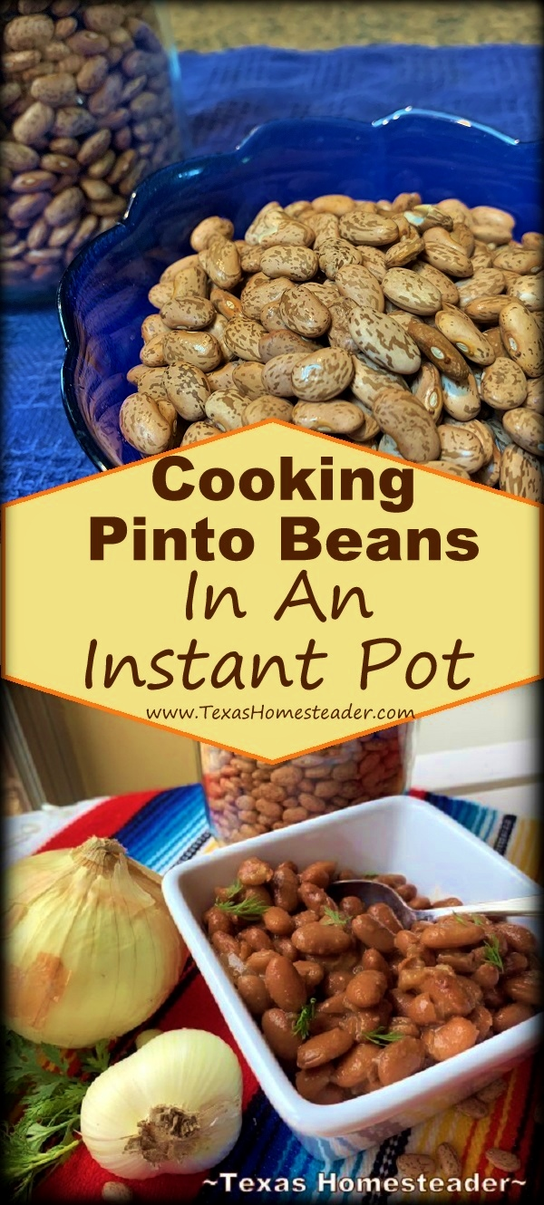 Come see how to easily cook dry pinto beans in an Instant Pot. #TexasHomesteader
