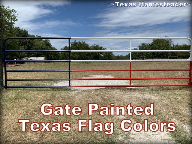 Gate painted Texas flag colors. How To Paint A Texas Flag Gate. It was a quick and enjoyable project. And I love the way our gate painted in a Texas flag design looks. #TexasHomesteader