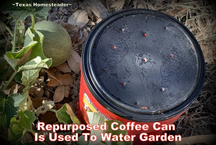 A repurposed coffee can can be used for deep soak watering in the garden. It conserves water while allowing water to slowly drip. #TexasHomesteader