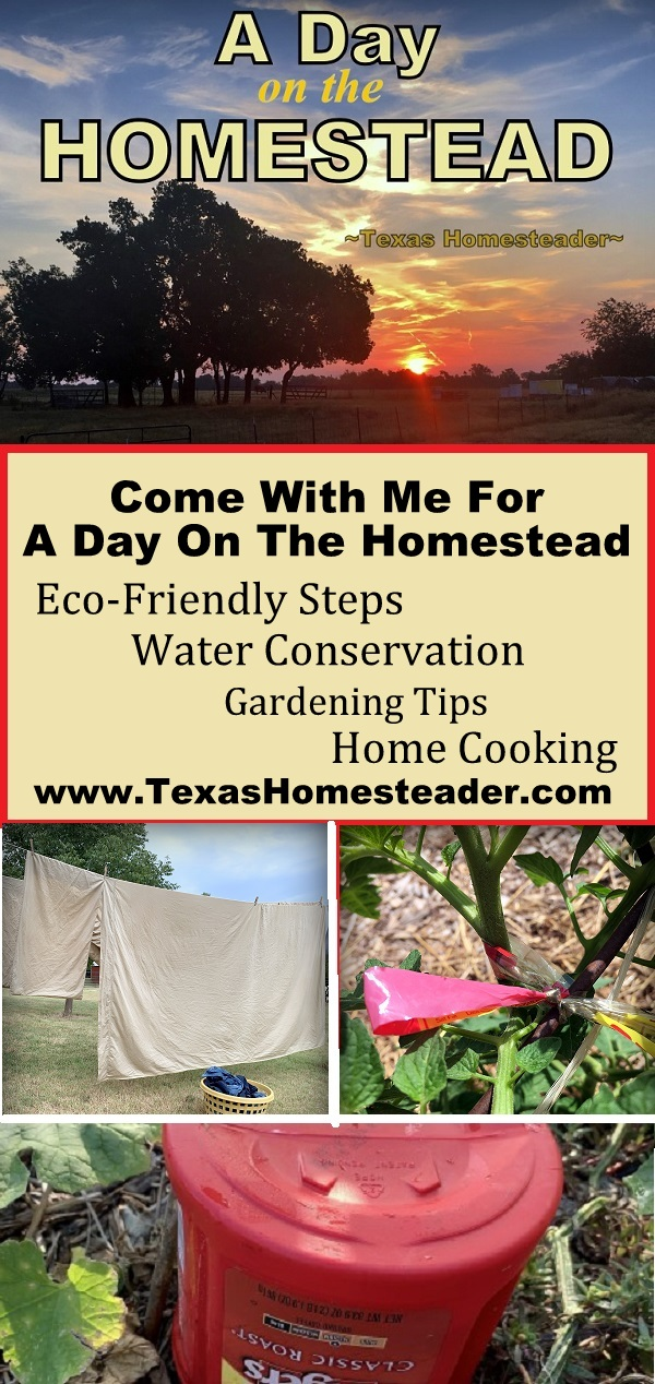 Come with me for a day on the Homestead. The changing seasons are welcome, but not without their trials. #TexasHomesteader