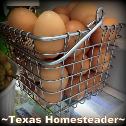 Styrofoam egg cartons not needed with my own hens & this wire basket. #TexasHomesteader