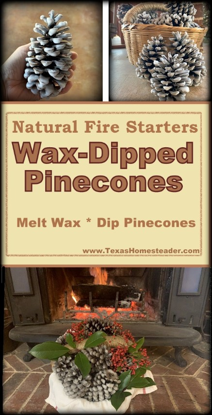 Waxed Pinecone fire starters made by dipping pinecones in wax #TexasHomesteader