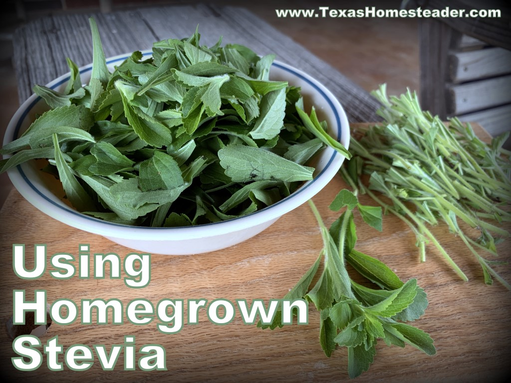 If I want to dry stevia, I quickly wash the stems, strip the leaves and allow to dry. #TexasHomesteader